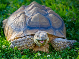 Задача черепаха в C++